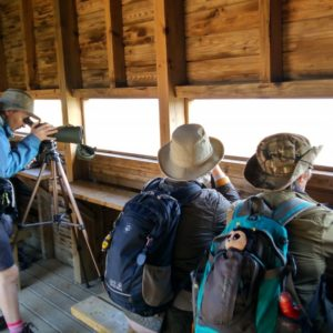 Guided Birdwatching